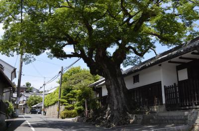 20170821 岸和田の木